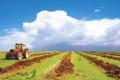 В агропромышленном комплексе сократилось число работников